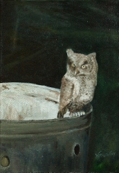 young-screech-owl