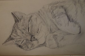 cat-pencil-drawing