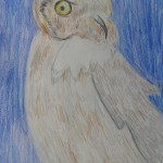 Owl drawing by Abby S.