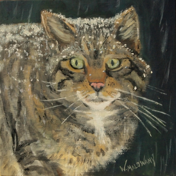 scottish-wildcat-painting-malowany