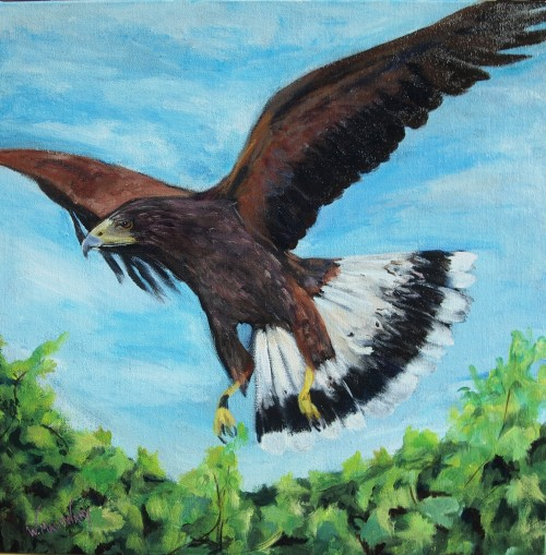 harris-hawk-painting-malowany