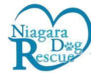 NDR - logo cropped